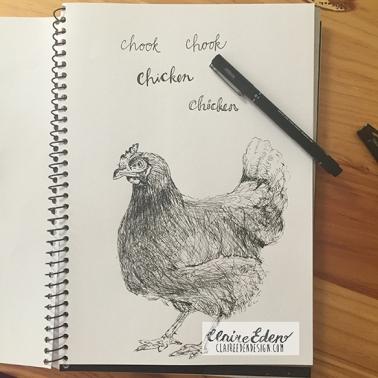 chicken_sketchbook